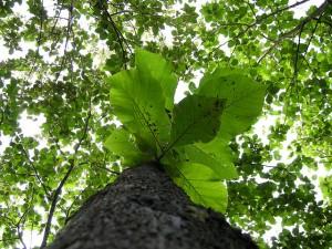 reforestaton-visa-panama
