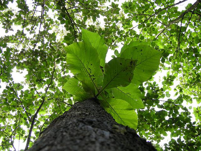 reforestation visa panama