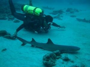 scuba-diving-costa-rica-01